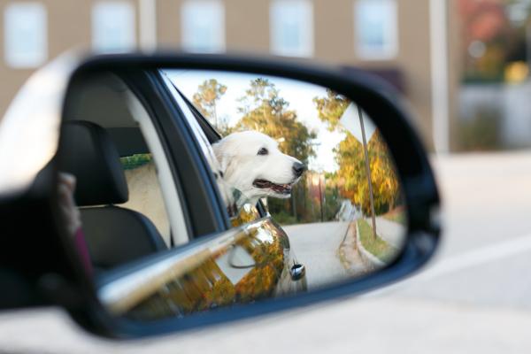 Smyrna-Dog-Photographer-Nina-Parker-Pets-PhotographyIMG_1741